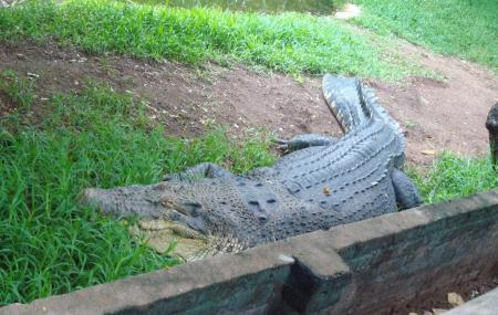 Crocodile Bank Image