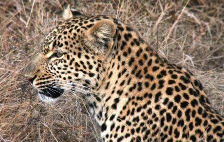 African Flame Safaris Image