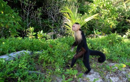 Cahuita National Park Image