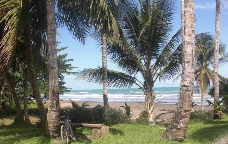 Caribbean Coconut Image