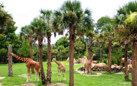 Jacksonville Zoo And Gardens Image