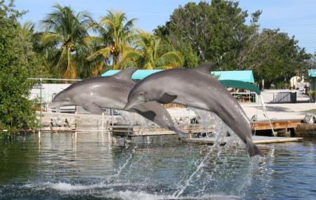 Dolphins Plus Image