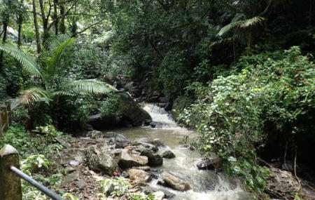 El Yunque Rain Forest Image