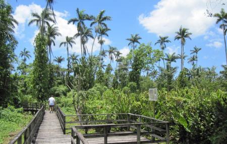 Royal Palm Reserve Image