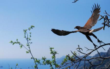 Le Ali Nel Vento- Birds Of Prey Show Image