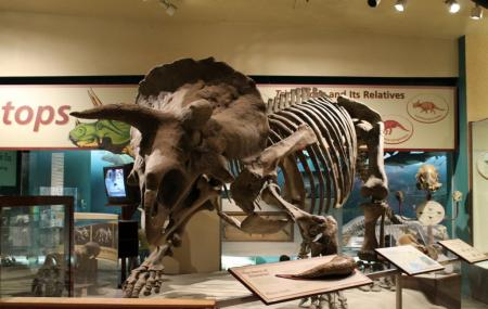 National Museum Of Natural History Image