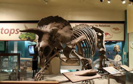 National Museum Of Natural History, Paris