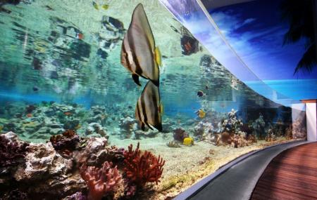 Aquarium Mare Nostrum Image