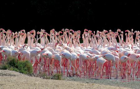 Ras Al Khor Wildlife Sanctuary Image