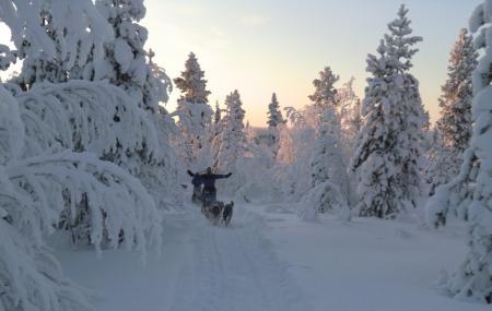 Kiruna Sleddog Tours Image