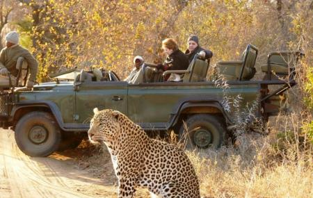 Game Drives At Phalaborwa Gate Image
