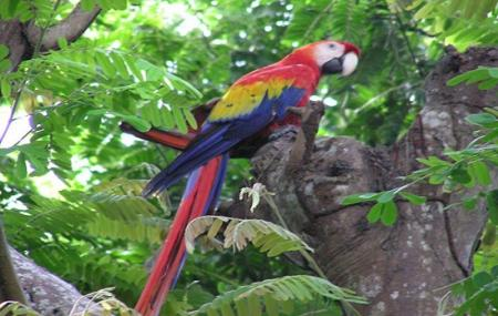 Diego Birding And Nature Day Tours Image