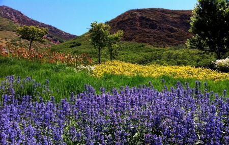 Red Butte Garden Image