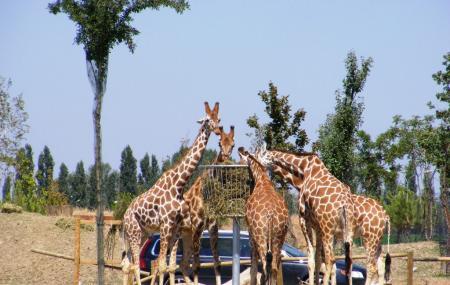 Safari Ravenna Image