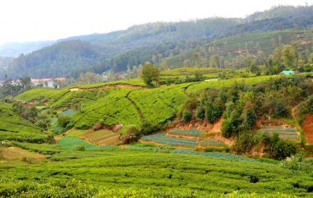 Bluefield Tea Gardens Image