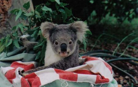 Koala Hospital Image