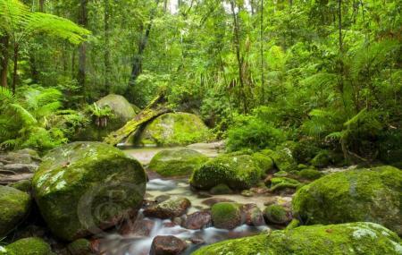 Daintree Rainforest Image