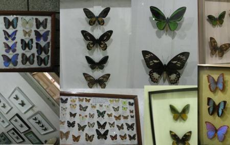 Jumalon Butterfly Sanctuary Image