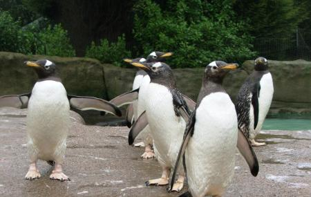 Mini Zoo Image