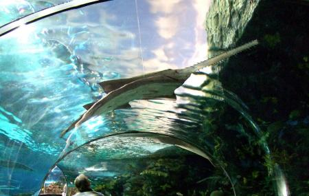 Ripley's Aquarium Of The Smokies Image
