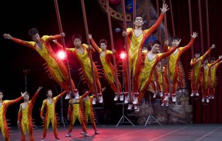 Benidorm Circus Image