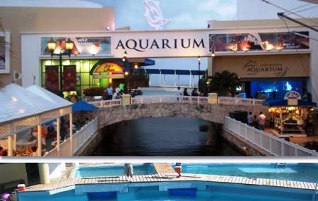 Interactive Aquarium Image