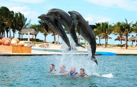 Delphinus Dreams Cancun Image