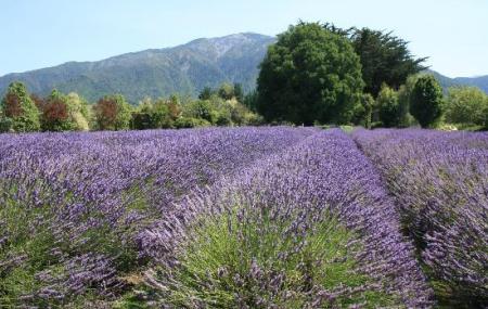 Lavendyl Lavender Farm Image
