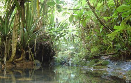 Colo-i-suva Forest Reserve Image