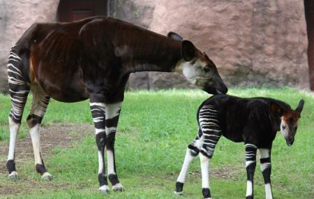 Saint Louis Zoo Image