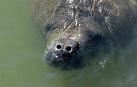Tampa Electric Manatee Viewing Center Image