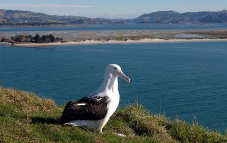 The Royal Albatross Centre Image