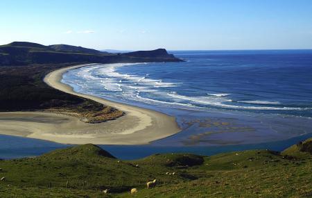 Otago Peninsula Image
