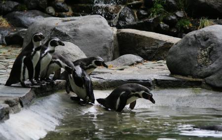 Prague Zoo Image