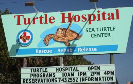 The Turtle Hospital, Marathon