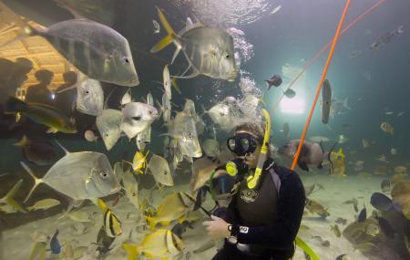 Florida Keys Aquarium Encounters Image