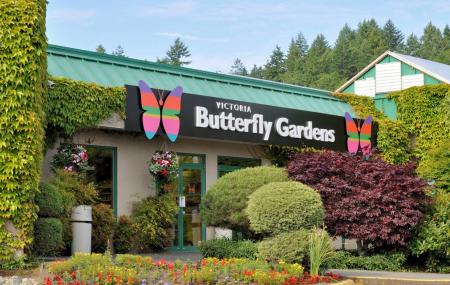 Victoria Butterfly Gardens Image