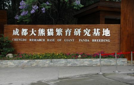 Giant Panda Breeding Research Base Image