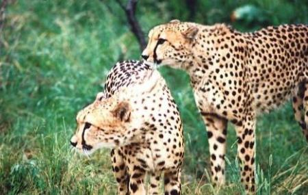 De Wildt Cheetah And Wildlife Centre Image