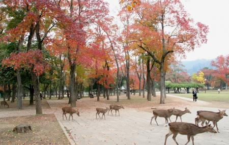 Nara Park Image