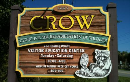 Clinic For The Rehabilitation Of Wildlife Crow Image