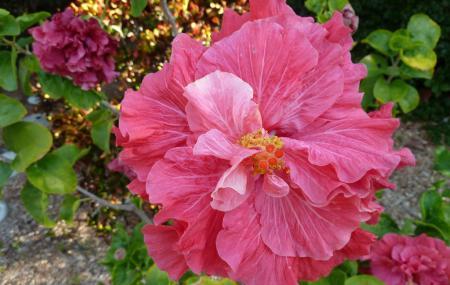 Sanibel Moorings Botanical Gardens Image