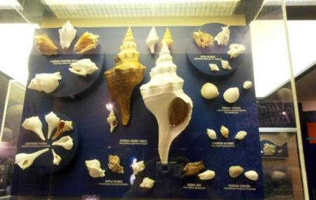 The Bailey-matthews National Shell Museum, Sanibel