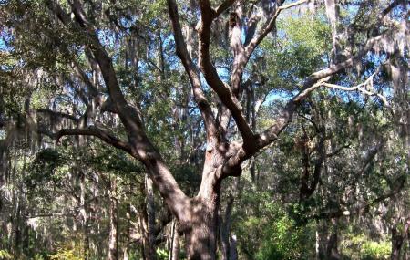 Jacksonville Arboretum And Gardens Image