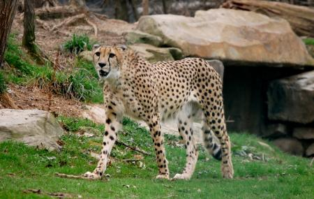 Cleveland Metroparks Zoo Image