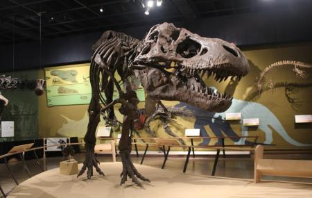 Cleveland Museum Of Natural History Image