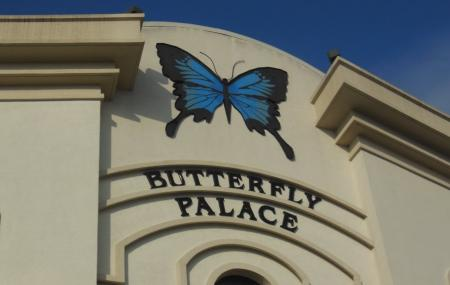 The Butterfly Palace And Rainforest Adventure Image