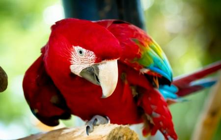 Bird Gardens Of Naples Image