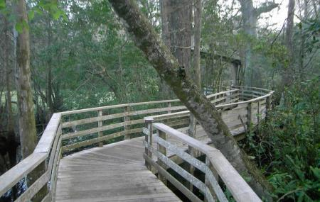 Corkscrew Swamp Sanctuary Image