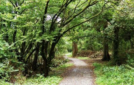 Ballyseedy Woods Image